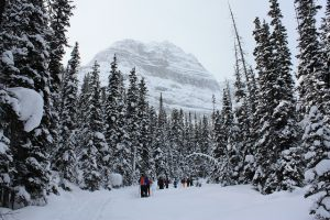 Winter Snowshoe 2016